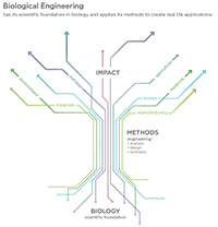 MIT Biological Engineering Department Illustrative Graphic